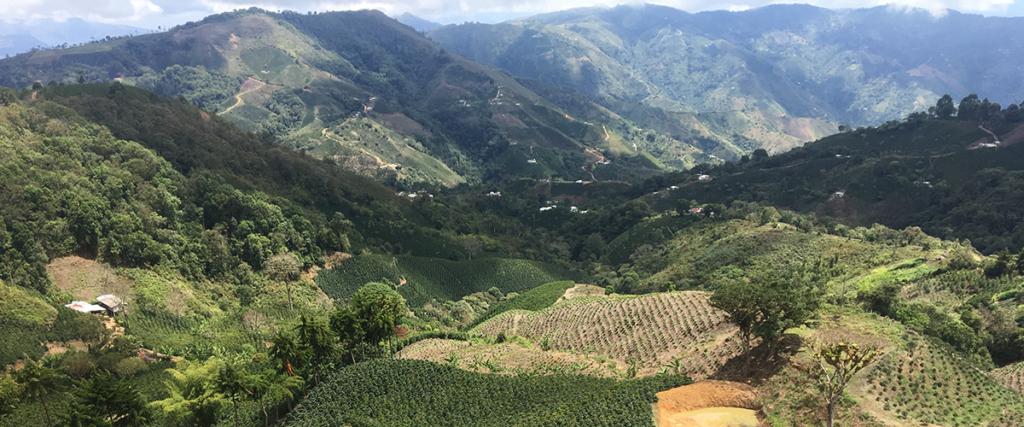 producteur de café de la Colombie